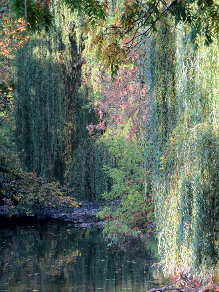 Weeping Willows - ID: 15672903 © Carolyn  M Fletcher